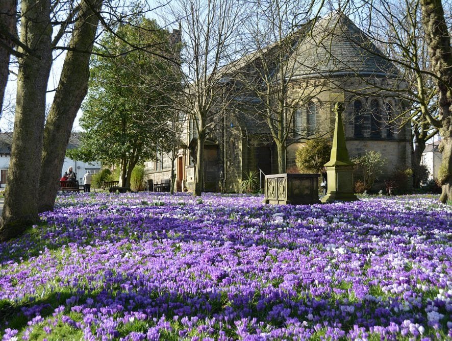 Crocus at St Chad's Church